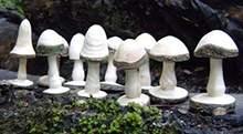 地产景观小品商业空间酒店会所软装配饰雕塑摆件木雕蘑菇